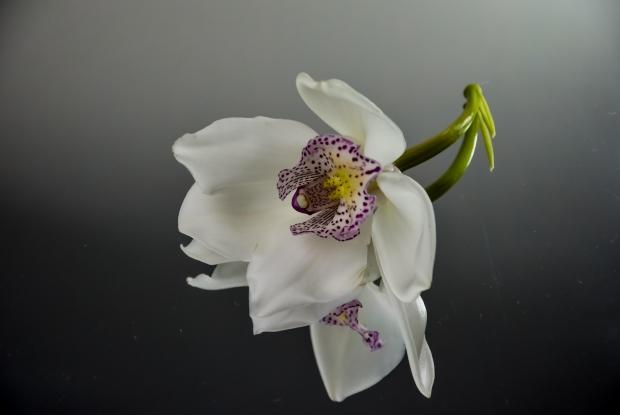 随州市树、市花是什么?