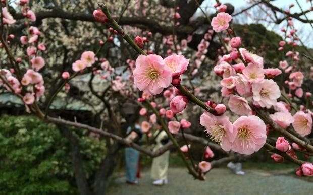 武汉市树、市花是什么?