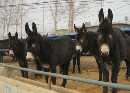 广西地区适合养殖马、驴、骡子等牲畜动物吗?