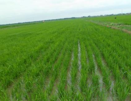 """河南郑州:坚持""""三个注重""""提高农业项目资金使用效益"""