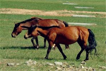 甘肃农村地区适合养殖马、驴、骡、牛、羊、骆驼吗?