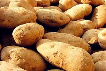 甘肃农村耕地适合种植小麦、玉米、棉花、水稻、马铃薯吗?