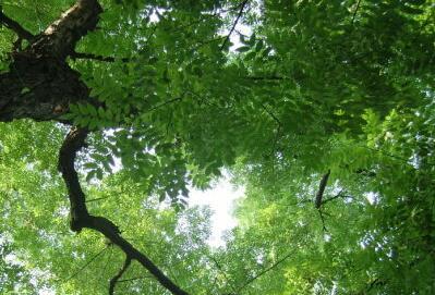 西安的市花市树是什么?