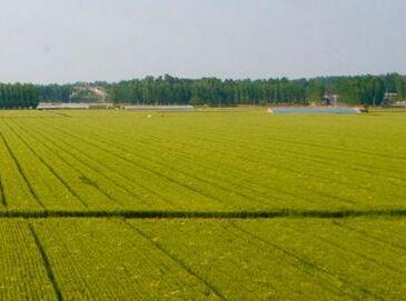 农村土地流转致富:采取公司+合作社+基地+农户经营模式