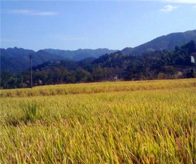 甘肃武威推进农业结构调整助农增收