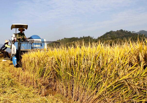 苏州新规:大学生毕业后可直接认定为新型职业农民