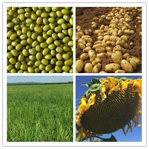 吉林的气候条件适合种植什么水果树和经济作物呢?
