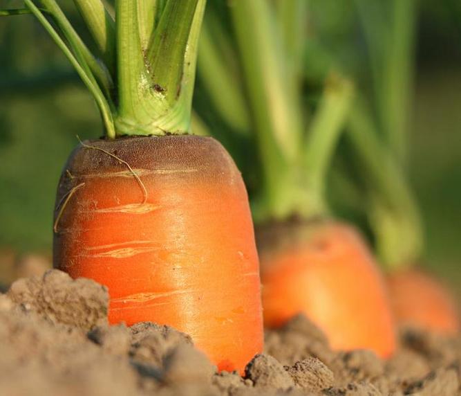 """蓝山强化农产品质量监管 全面打造""""放心蔬菜"""""""