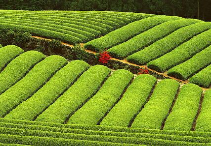 陕西省变更基本农田划定标准,25度以上坡耕地被调出