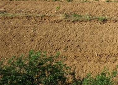 内蒙古积极推进土地流转新模式 助农脱贫