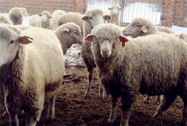陕西适合养殖猪、牛、羊、驴、鸡、鸭、鹅吗?