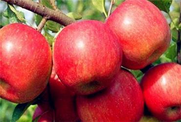 陕西农村地区适合种植苹果、猕猴桃、梨、桃、樱桃、石榴吗?