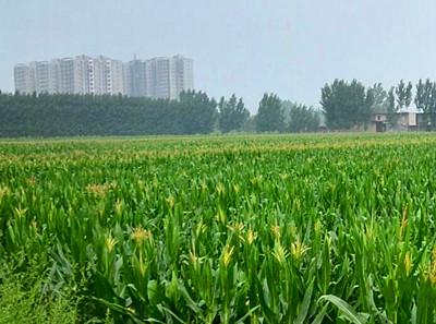 2016冕宁县人民政府办公室关于实施促进家庭农场发展的通知