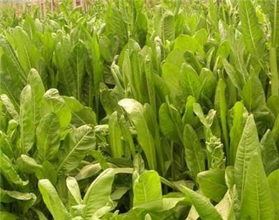 贵州气候土壤适合种植哪些经济作物?