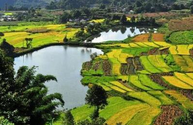 云南大理家庭农场经营面积达6.13万亩