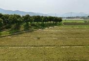 2016年粮食直补政策:伊犁州小麦补贴每公斤多少钱?