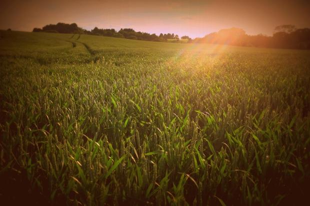 湘西凤凰县启动68个现代农业产业园