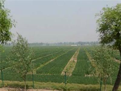 安徽濉溪县农林委扎实推进土地确权工作