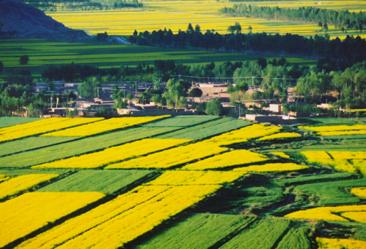 如何利用政策引导土地流转,推动规模化农业致富?