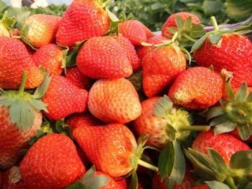杭州周边十大草莓采摘地介绍
