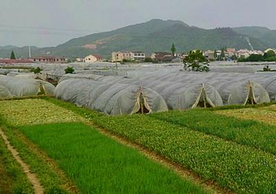 彭水县2016年农业支持保护补贴首次发放已基本完毕!