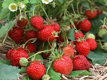 """素有""""南太湖明珠""""之称的湖州哪里可以摘草莓?"""