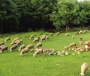 黑河市制定《畜牧产业发展三年(2016-2018年)行动计划》