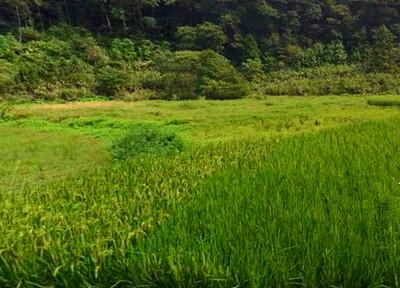 """汉川市种植业发展""""十三五""""规划"""