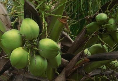 三亚将建立市、区两级品牌农产品认证机制