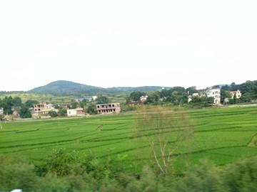 湖北省召开全国稻田综合种养交流会,为农业转型升级提供技术支撑