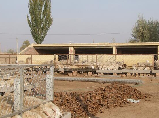新疆土地流转发展态势及相关消息