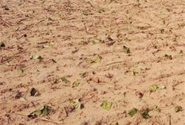 江西:九江武宁澧溪镇耕地地力保护补贴资金达312.6万元