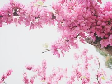大理州花卉产值达38亿元