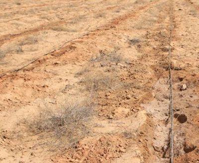 土地流转助推高效农业发展(金湖县)