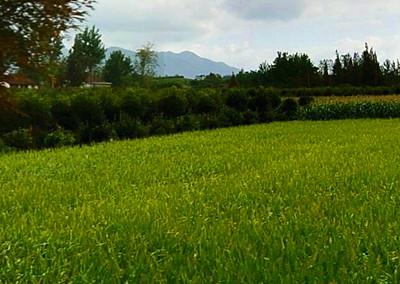 2016陇南市加快转变农业发展方式实施方案