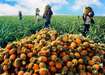 甘肃:支持家庭农场发展订单农业,引导建立农业利益联结机制
