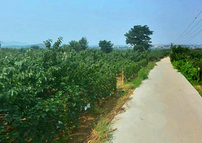 合川区已兑付2016年农业支持保护补贴资金13257.05万元!