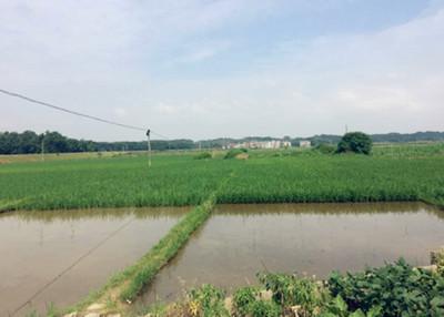 农村土地流转呈现多样化对农民的好处