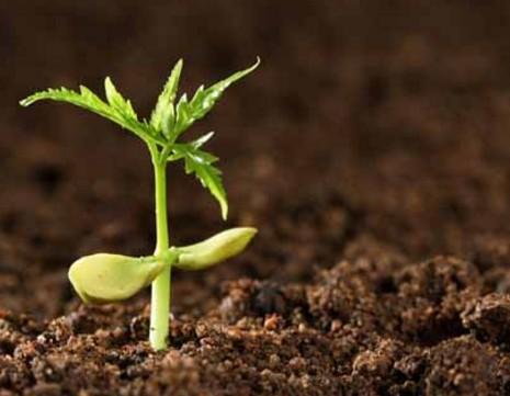 广西桂林:推动修复土壤来增产提质