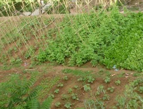 山东省:农业示范村菜农老崔的市场观