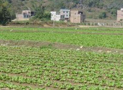 每年安排100万补贴土地流转农户?从化区土地流转征求意见这样说!