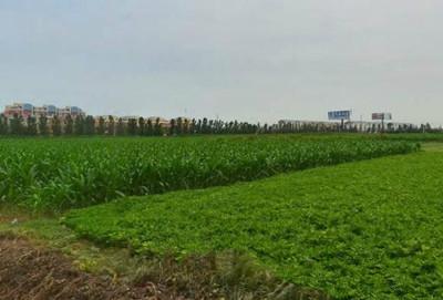 景洪市嘎洒镇2016年中央农业支持保护补贴政策部署