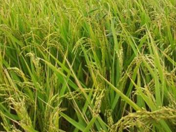 中国缙云县新增的粮食补贴政策你都知道吗?