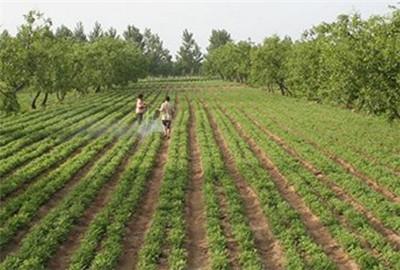 青海省:海北州标准化农业鼓了农牧民的钱袋子