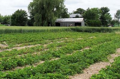 江苏土地有序流转 家庭农场大获增收