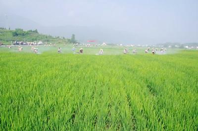 云南省2016年上半年农村土地流转最新情况