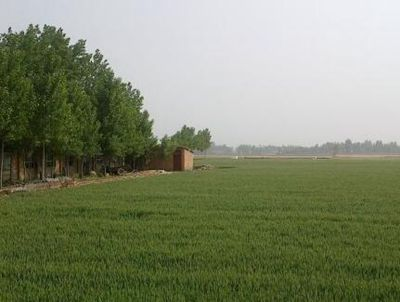 山东聊城土地流转面积达181.22万亩 农业适度规模经营见成效