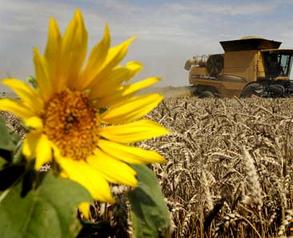 2016俄罗斯农业大放招,农产品产量预计增长45%