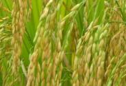 2015年粮补政策
