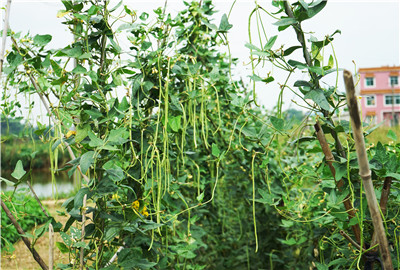 黑龙江省推进供给侧改革实现向绿色食品大省跨越